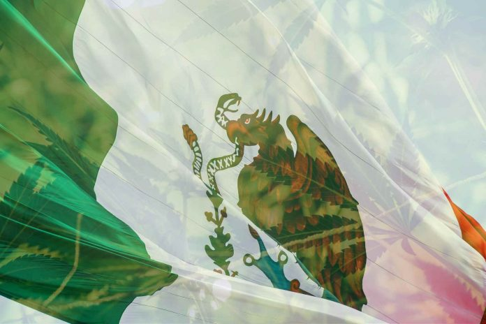 Meksika legalizuos kanapes